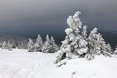 Árvores nevado Fotografia de Stock Royalty Free