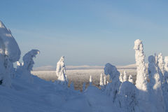 Árvores nevado Fotos de Stock