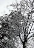 Árvores nevado Imagem de Stock