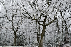 Árvores nevado com cerca e neve Fotos de Stock Royalty Free