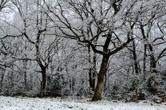 Árvores nevado com o prado da cerca e da neve Fotografia de Stock