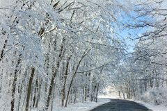 Árvores nevado do inverno Fotos de Stock Royalty Free