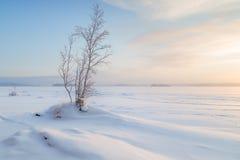 Árvores nevado e lago em Finlandia foto de stock