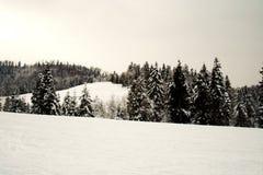 Árvores nevado em fevereiro Foto de Stock