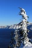 Árvores nevado no lago crater Foto de Stock Royalty Free
