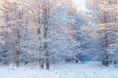 Árvores nevados em um parque da cidade em um dia ensolarado imagens de stock royalty free