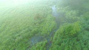 Árvores nevoentas do pântano das hortaliças do cenário da manhã aéreas filme