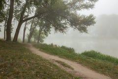 Árvores nevoentas no parque Imagem de Stock