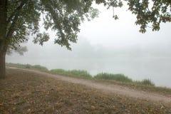 Árvores nevoentas no parque Imagens de Stock Royalty Free