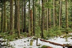 Árvores no ajuste do inverno Imagens de Stock