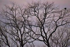 Árvores no banco de rio fotografia de stock royalty free