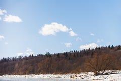 Árvores no banco de um rio congelado no inverno contra o céu azul imagem de stock