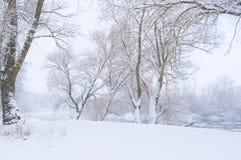 Árvores no banco do rio Imagens de Stock