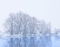 Árvores no banco do rio Fotos de Stock