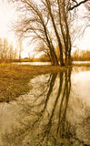 Árvores no banco do rio na mola Imagem de Stock