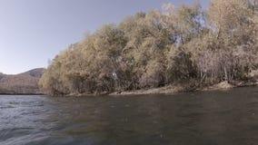 Árvores no banco do rio rapidamente vídeos de arquivo