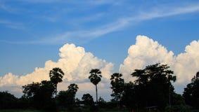 Árvores no céu do por do sol Fotos de Stock