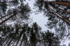 Árvores no céu fotografia de stock