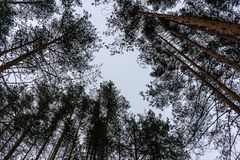 Árvores no céu fotografia de stock royalty free