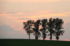 Árvores no campo Imagens de Stock Royalty Free