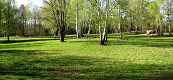 Árvores no campo Imagem de Stock