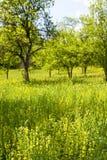 Árvores no campo Fotos de Stock Royalty Free
