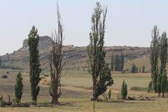 Árvores no campo Fotografia de Stock Royalty Free