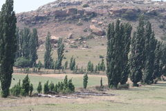 Árvores no campo Fotografia de Stock