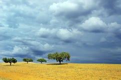 Árvores no campo arado Imagem de Stock