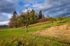 Árvores no campo com as nuvens no céu Fotografia de Stock