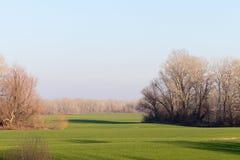 Árvores no campo do campo Foto de Stock