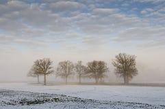 Árvores no campo do inverno Fotos de Stock Royalty Free