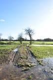 Árvores no campo inundado Imagens de Stock Royalty Free