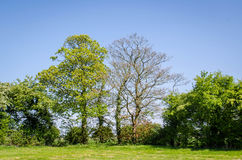 Árvores no campo na mola Fotografia de Stock Royalty Free