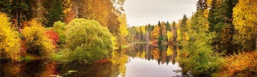 Árvores no campo no outono Foto de Stock Royalty Free