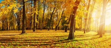 Árvores no campo no outono Fotos de Stock