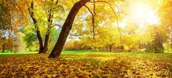 Árvores no campo no outono Foto de Stock