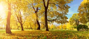 Árvores no campo no outono Fotografia de Stock Royalty Free