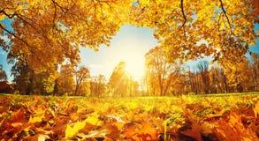 Árvores no campo no outono Fotografia de Stock