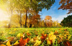 Árvores no campo no outono Imagem de Stock