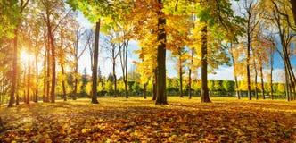 Árvores no campo no outono Imagens de Stock Royalty Free
