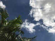 Árvores no canto com fundo do céu azul Imagens de Stock