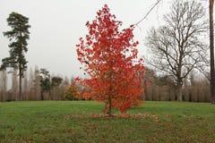 Árvores no castelo de Versalhes, no inverno imagens de stock royalty free