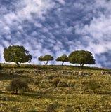 Árvores no cume fotografia de stock