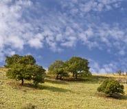 Árvores no cume imagens de stock royalty free