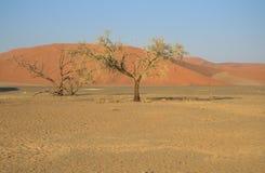 Árvores no deserto Foto de Stock