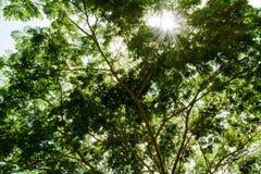 Árvores no dia ensolarado imagens de stock