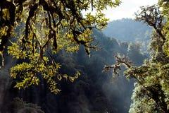 Árvores no fundo com a montanha NEPAL dos Himalayas da floresta úmida Fotografia de Stock