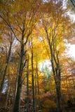 Árvores no fundo da estação do outono Fotografia de Stock