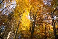 Árvores no fundo da estação do outono Imagens de Stock Royalty Free